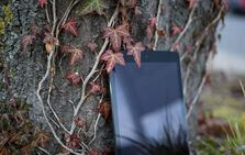 Photo: Tablet leaning against a tree